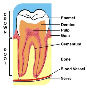 Find out how our Glendale dental crown professionals can help!